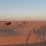 砂漠でキャメルライディング