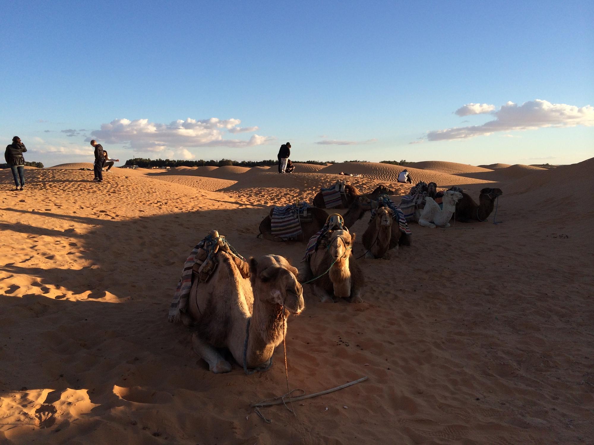サハラ砂漠でラクダと一緒ににっこり